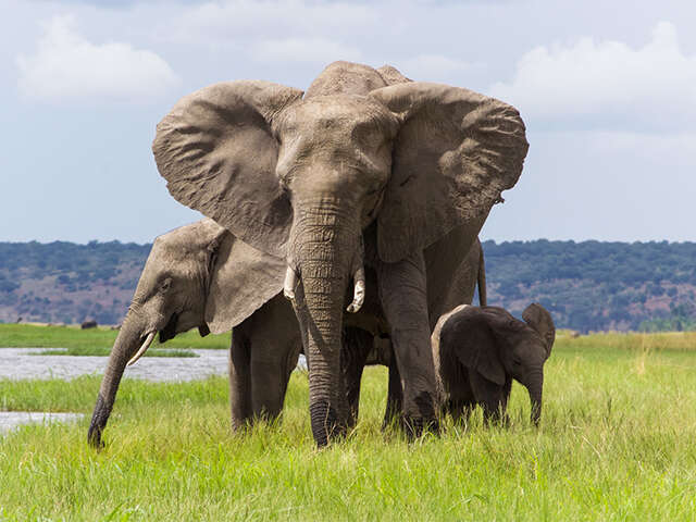 SITA_Botswana_Chobe-National-Park_Elephant-Family_Splendors-of-Africa_Hero-Image_Nov2018.jpg