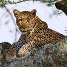 Kenya in Luxury
