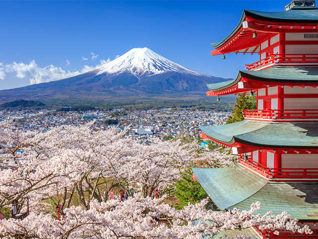 Japan Cherry Blossom Tour