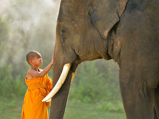 SITA_Thailand_Northern Thailand_young monk and elephant_Hero-Image_Nov2018.jpg