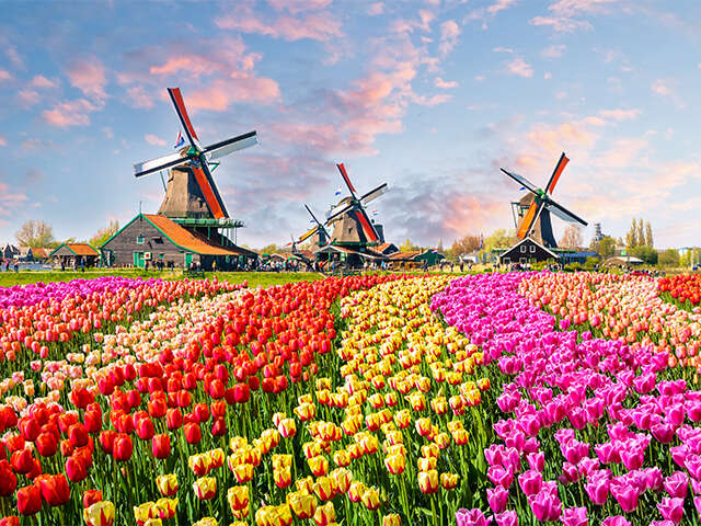 Viking_Netherlands_Zaanse Schans_Tulips-and-Windmills_Hero-Image_Apr2019.jpg