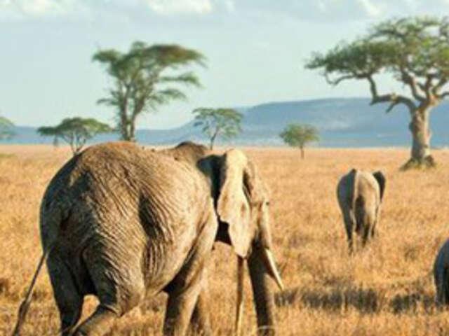 Women Travel to Kenya & Tanzania Safari