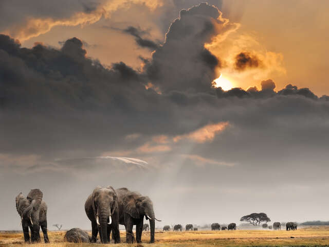 African Travel - Discover the Magic of Africa. Save $400 per couple.