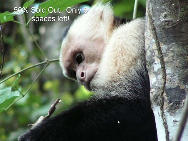 Escape Journeys Exclusive 17 Day Adventure in Costa Rica 2020.  50% Sold out.  Only 6 seats left!