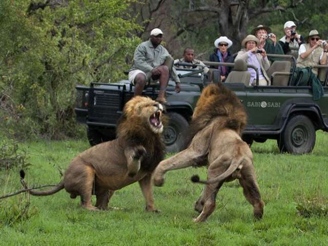 More ways to take your Family to South Africa