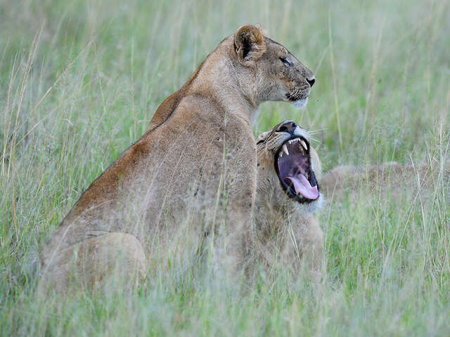 Tales from the Serengeti
