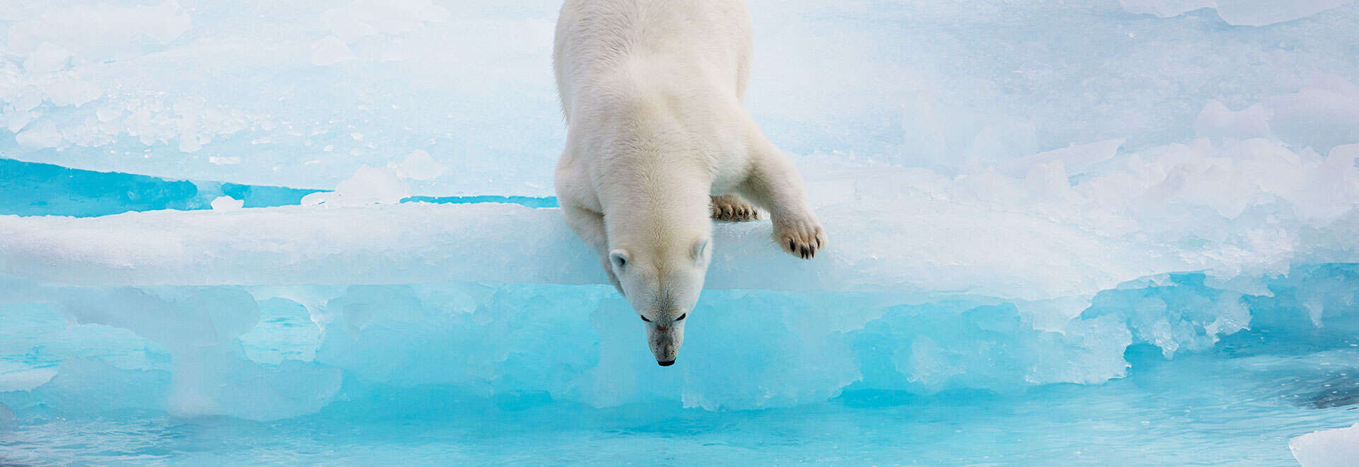 Arctic Cruise Adventure: In Search of the Polar Bear 2020