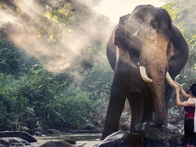 Wellness Adventure in Thailand