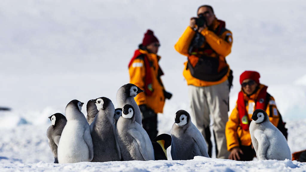 Quark Expeditions: A Leader in Polar Adventure