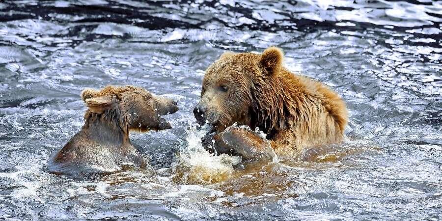 Wilderness Exploration - William Henry Bay, Alaska