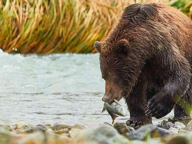 Alaska and British Columbia – Inside Passage, Bears and Aleutian Islands (Northbound)2022