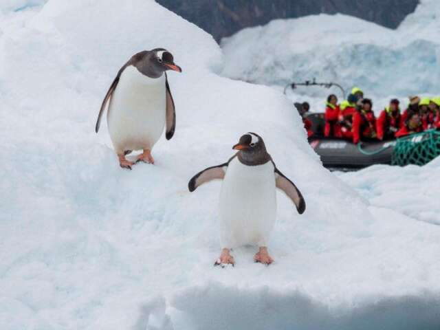 Exploration of Antarctica, Chilean Fjords and Falklands (Itinerary 2)