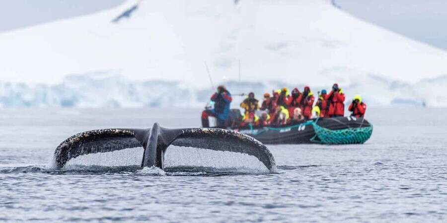 Antarctica … Another World! - Antarctica