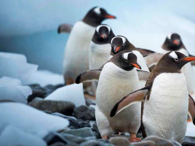 Exploration of Antarctica, Patagonia and the Falklands (Northbound)