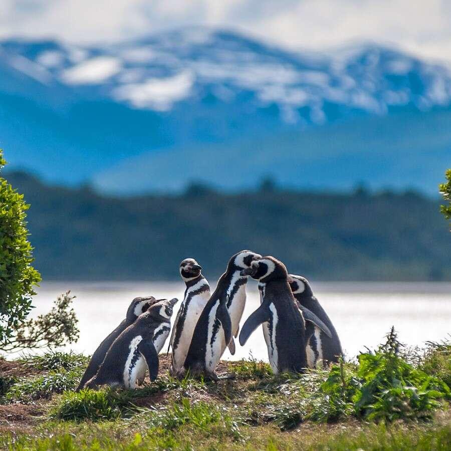 Cruising through paradise - Chilean fjords