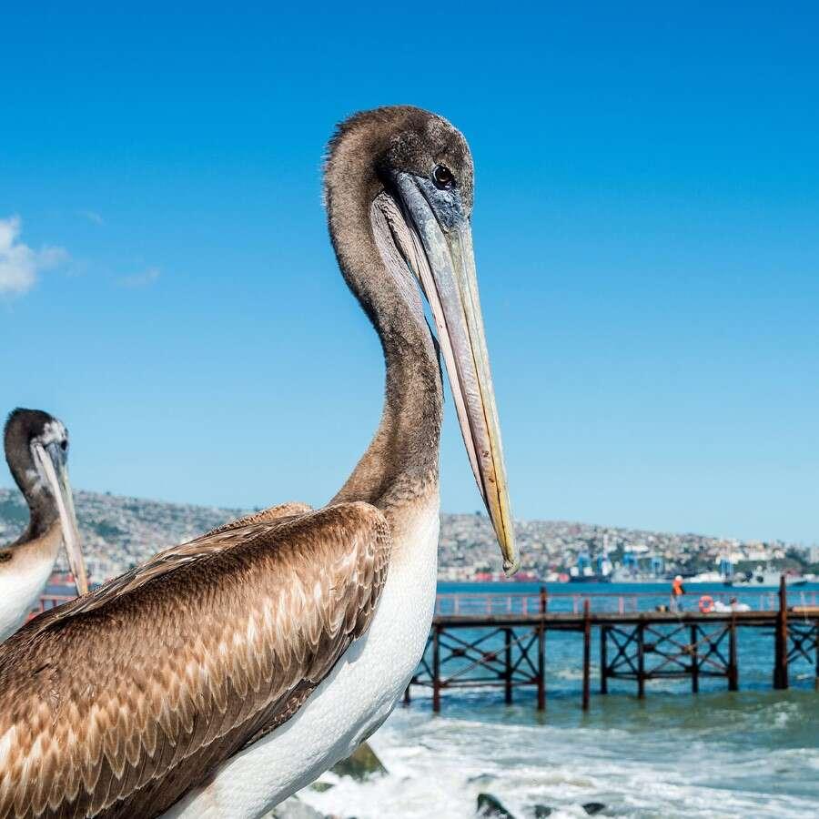Homeward bound - Valparaíso, Chile