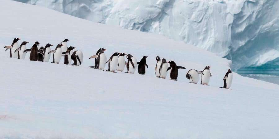 Antarctica – Impossible to Describe - Antarctica