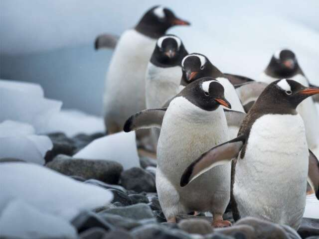 Antarctica and Falklands - Southern Hemisphere Adventure (Southbound)