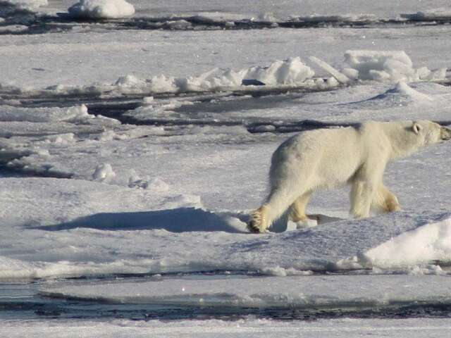 Circumnavigating Spitsbergen - In the Realm of the Polar Bear