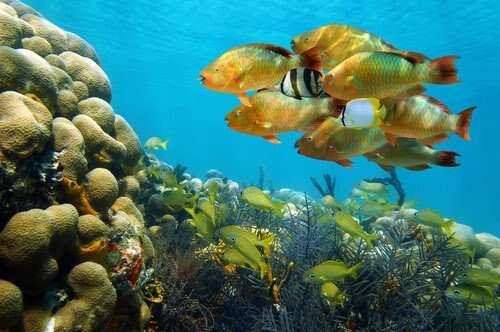Amazing Wildlife - Bocas del Toro, Panama