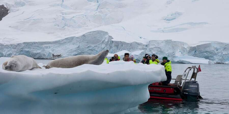 Penguins, Icebergs, Seals and Whales - Antarctica