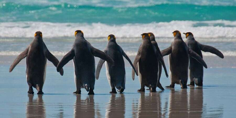 Where Nature is Still in Charge - The Falkland Islands