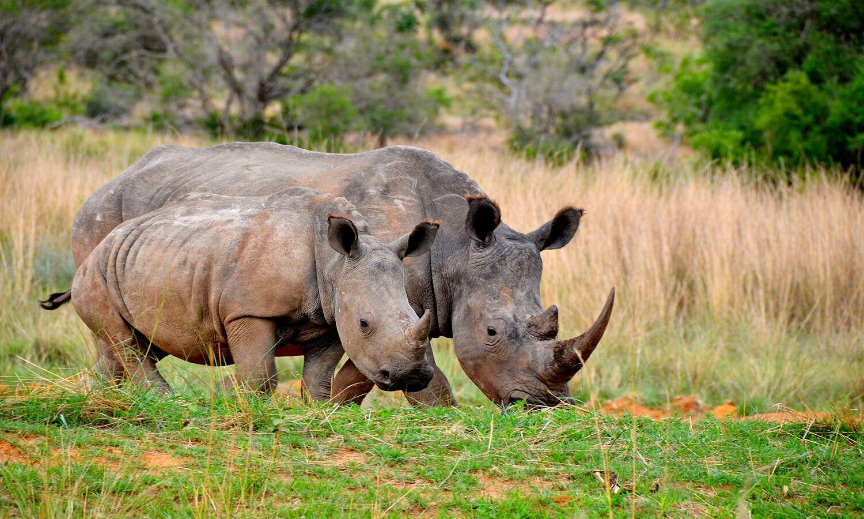 Karongwe Game Reserve
