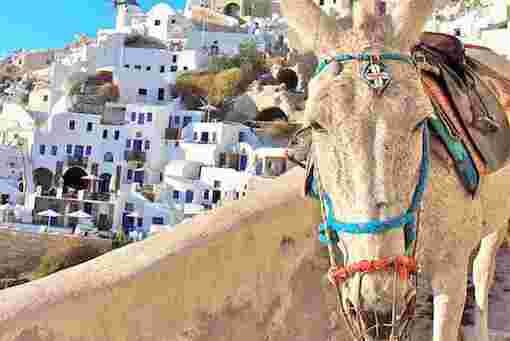 Santorini Donkey - Thira Destination Wedding