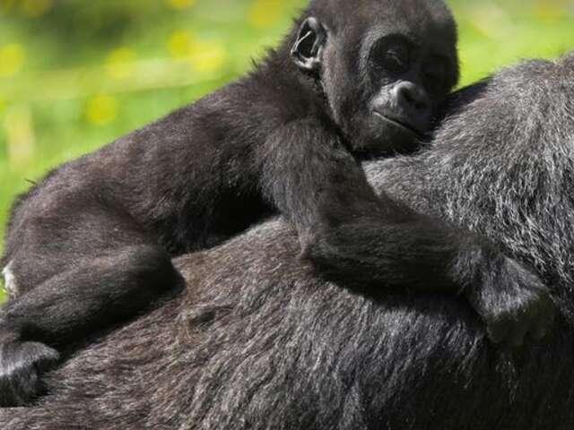 Uganda & Gorillas Overland
