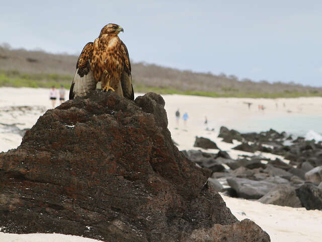 Discover Machu Picchu and Galápagos - Land & Sea Central Islands