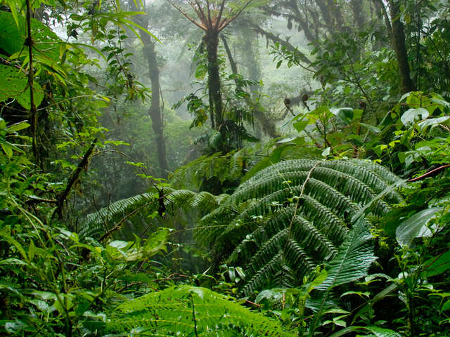Costa Rica Volcanoes & Cloud Forest