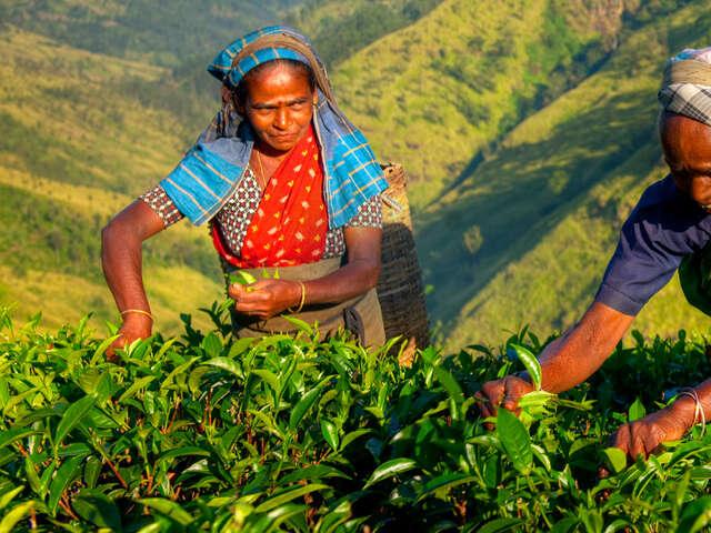 Cultural Sri Lanka