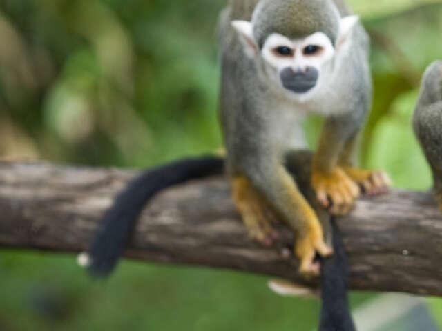 Local Living Ecuador—Amazon Jungle