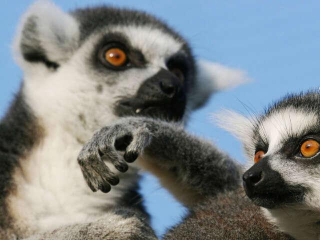 Highlights of Madagascar