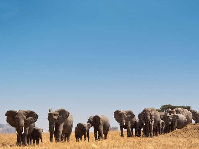 Safari in Kenya & Tanzania