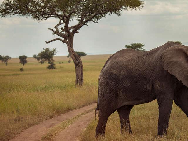 Victoria Falls and Serengeti Adventure