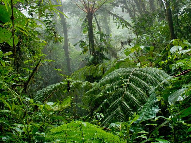 Costa Rica Volcanoes & Cloud Forest
