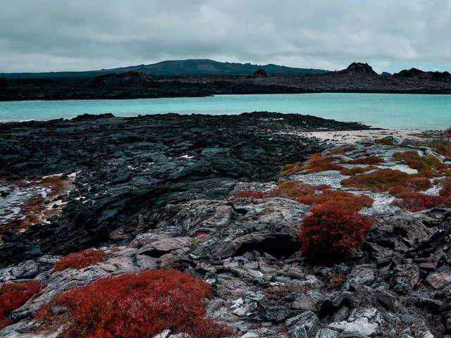 Galápagos — North, Central & South Islands aboard the Estrella