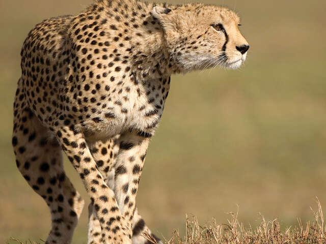 Kruger & Swazi Overland