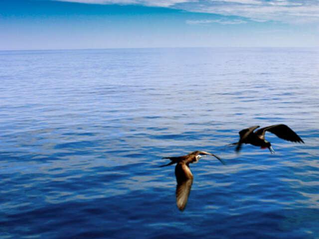 Galápagos — North & South Islands aboard the San Jose