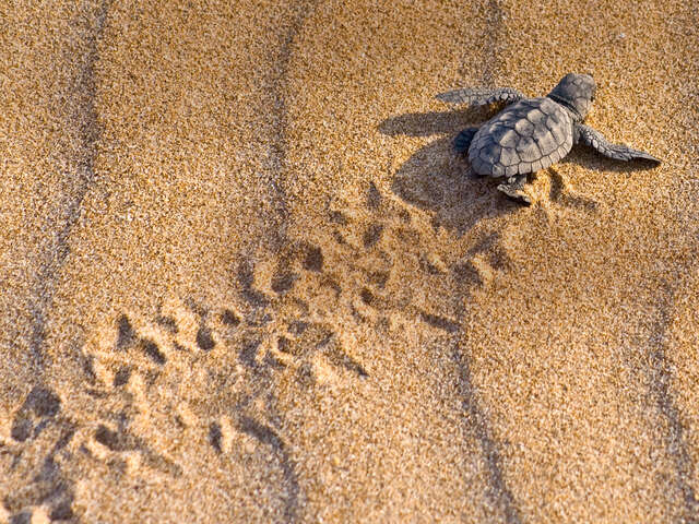 Turtles and Tortuguero Independent Adventure