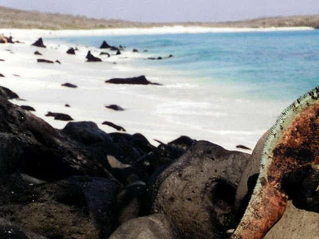 Galápagos — North & Central Islands aboard the San Jose
