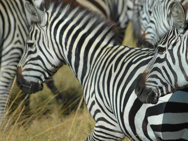 Kenya & Tanzania Overland