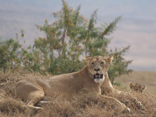 Tanzania: The Serengeti & Beyond with Selous
