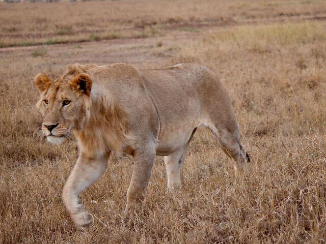 Serengeti to Victoria Falls Adventure