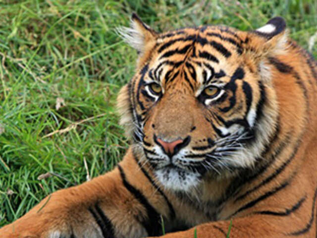 Icons of India: The Taj, Tigers & Beyond with Nepal
