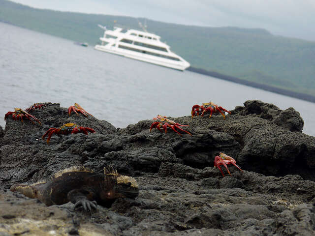 Galápagos — South & East Islands aboard the Queen of the Galápagos