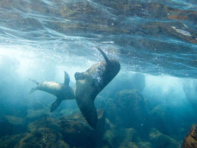 Galápagos Land & Sea — Central & East aboard the Xavier