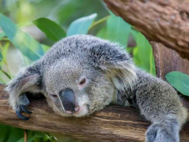 Sydney Reef and Rainforest summer 2018