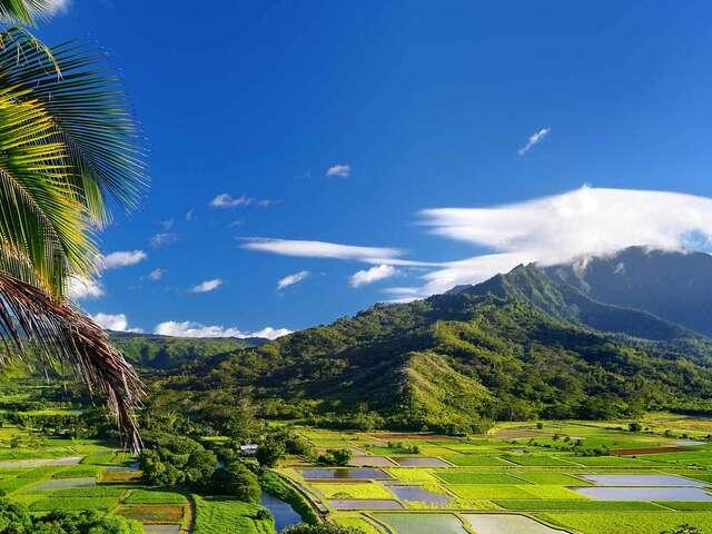 Hawaiian Discovery Premier Summer 2018